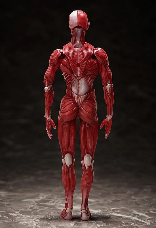 figma 人体模型 フリーイング 可動フィギュアが予約開始!人体の構造を細部まで再現! 0831hobby-jintai-IM002